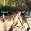 Half Off Trail Ride for Two at Splendor Farms in Bush