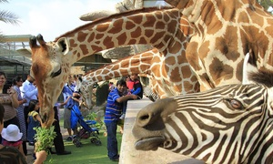 Emirates Park Zoo & Resort: Child or Adult Entry to Zoo Including Sea Lion Show and Animal Ride at Emirates Park Zoo & Resort (Up to 55% Off)