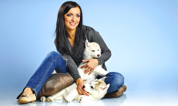 AbbraJazz Pet Salon and Spa - Ormond Beach: Up to 50% Off Dog Grooming at AbbraJazz Pet Salon and Spa
