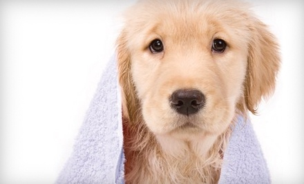 For Pet's Sake Grooming Parlour: Medium Dog's Haircut or a Large Short-Haired Dog's Bath and Tidying - For Pet's Sake Grooming Parlour in