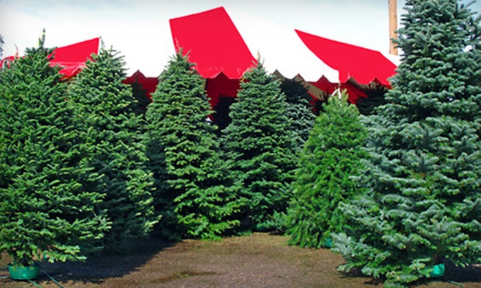 $10 for Christmas Trees and Holiday Wreaths   Moon Valley Nursery