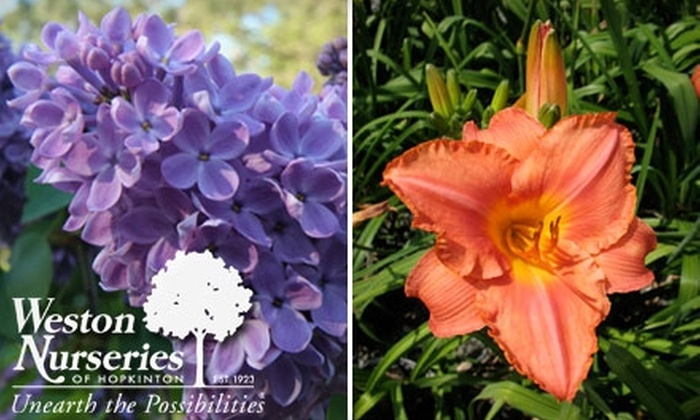 Weston Nurseries - Hopkinton: $20 for $50 Worth of Plants, Products, and Services at Weston Nurseries in Hopkinton