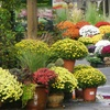 Half Off Plants & Accessories in Alexandria
