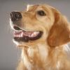64% Off Pet Care at Utopia Animal Hospital