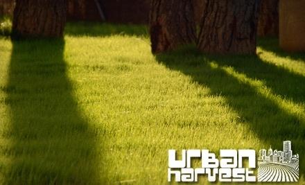Urban Harvest - Urban Harvest in