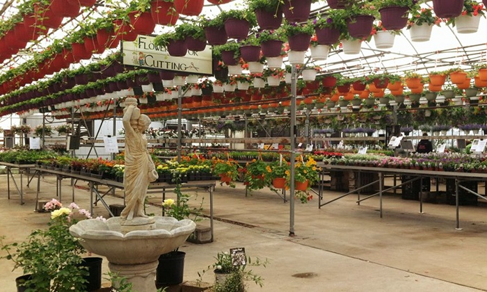 Ludema's Floral & Garden - Grand Rapids: $25 for $40 Worth of Plants at Ludema's Floral & Garden