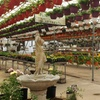 38% Off Plants at Ludema's Floral & Garden
