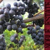 Half Off Wine at Noble Estate Vineyard & Winery