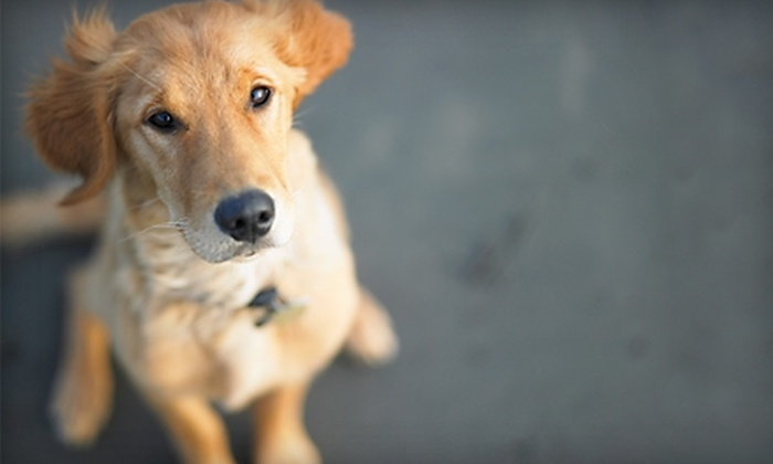 Yips & Yaps - St Louis: $25 for $50 Worth of Canine Boarding, Daycare, and Grooming Services at Yips & Yaps in Cottleville