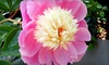 Gull Lake Landscape Co. - Richland: $25 for $50 Worth of Plants and Flowers at Gull Lake Landscape Co. in Richland