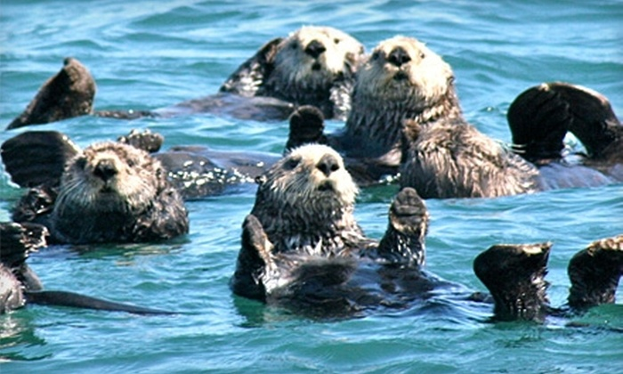Homer Ocean Charters - Homer: $42 for One Adult Admission to a Gull Island Narrated Boat Tour from Homer Ocean Charters ($86 Value)