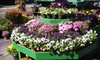 Goffle Brook Farm - Ridgewood: $15 for $30 Worth of Flowers, Plants, and Garden Supplies at Goffle Brook Farm