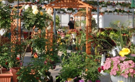 $20 Groupon to Floral Acres  - Floral Acres in Saskatoon
