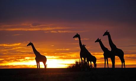 ✈ 8-Day Kenya Safari with Airfare