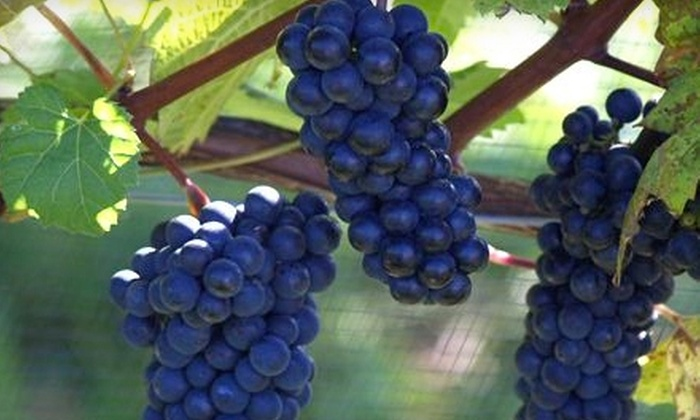 Muir Murray Estate Winery - Wolfville: $10 for Wine Tasting and Tour for Four at Muir Murray Estate Winery in Wolfville ($20 Value)