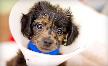 $10 Donation to PAWS Chicago - PAWS Chicago in Chicago