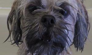 Doggi Pawz Self-wash And Grooming: Two Self-Serve Dog Washes at Doggi Pawz Self-Wash and Grooming (53% Off)