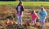 Corn Maize Admission for Six with Activities
