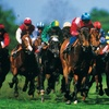 Preakness Stakes Tickets via FanXchange