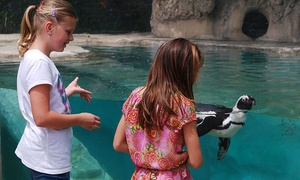 Children's Zoo At Celebration Square: $12 for Admission for Four at Children's Zoo At Celebration Square ($20 Value)