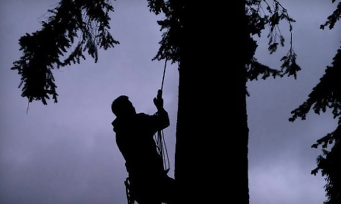 Beckner Tree Care - Seattle: $99 for Up to $360 Worth of Tree Services from Beckner Tree Care
