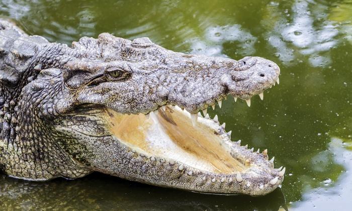 Le Bonheur Crocodile Farm - Stellenbosch: Croc Farm Tour Plus Cheese Platter and Wine at Le Bonheur Crocodile Farm