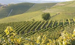 Ca' Trifolera Azienda Vitivinicola: Tour di cantine e collezione privata più degustazione vino con prodotti delle Langhe nel Barbaresco (sconto fino a 63%)