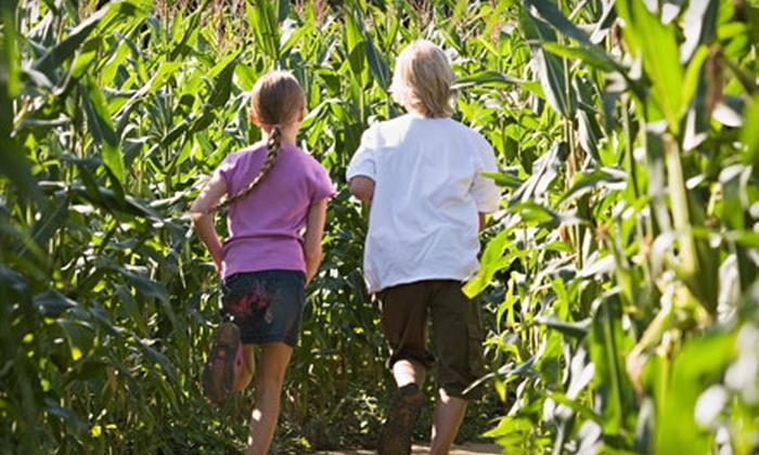 Ken's Korny Corn Maze - GARNER: Corn-Maze Visit for Two, Four, or Six at Ken's Korny Corn Maze (Up to 58% Off)