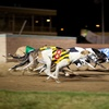 A Night at The Dogs