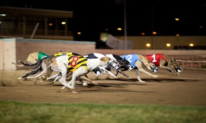 Love The Dogs: Greyhound Racing Entry with Refreshments for Two, Two Locations (74% Off)