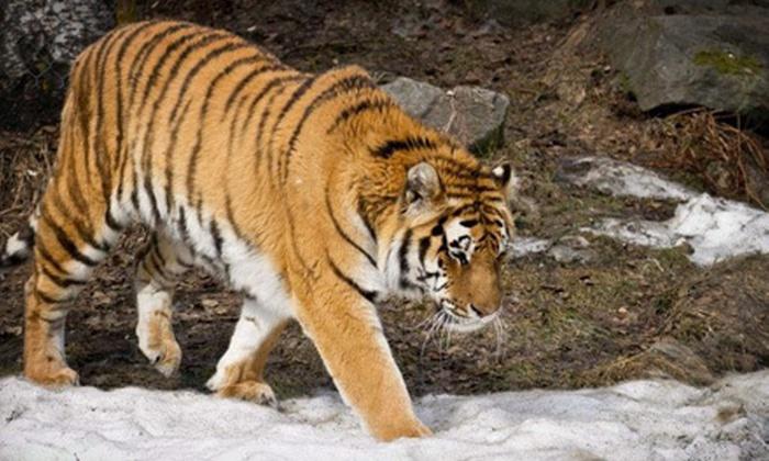 Alaska Zoo in - Anchorage, AK | Groupon
