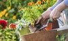 Soukal Floral Co - Garfield Ridge: $20 for $40 Worth of plants and flowers  at Soukal Floral Co