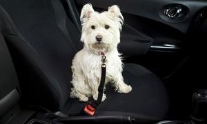 Laisse ceinture pour animaux