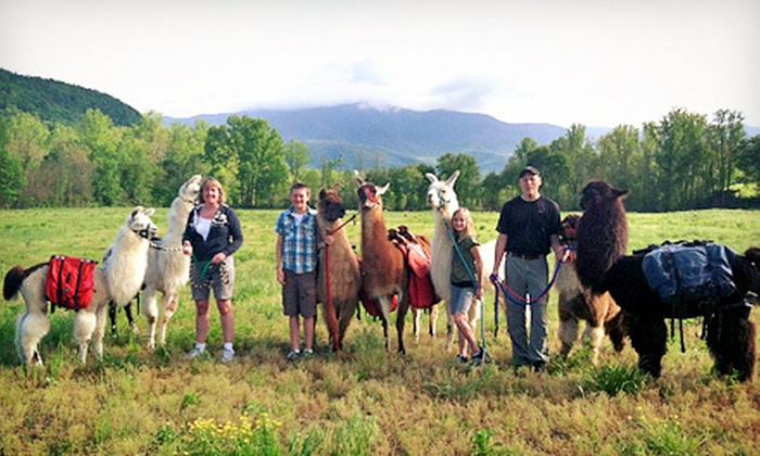 Smoky Mountain Llama Treks - Multiple Locations: Two- or Five-Hour Llama Trail Trek for Two from Smoky Mountain Llama Treks (Half Off)
