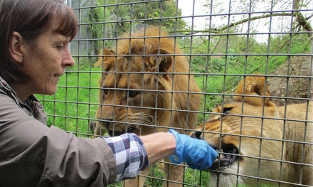 Meet and Feed Big Cat Gold Package for Two at Linton Zoo Conservation Park