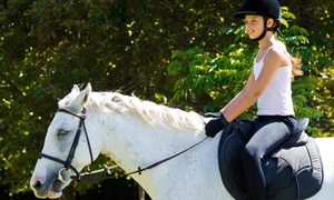 J.L.M. Equestrian: 5 or 10 30-Minute Group Horseback-Riding Lessons at J.L.M. Equestrian (Up to 66% Off)