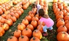 Perryville Pumpkin Farm - Perryville: Wagon Ride Package for Four, Six, or Eight at Perryville Pumpkin Farm (Up to 33% Off)