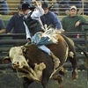 """Up to 58% Off Silver Spurs Rodeo """"Monster Bulls"""""""
