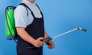 Cross Fire Pest Control: $62 for $123 Groupon — Cross Fire Pest Control