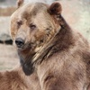 Up to 51% Off at Montana Grizzly Encounter