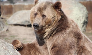 Montana Grizzly Encounter: Grizzly Bear Sanctuary Visit at Montana Grizzly Encounter (Up to 69% Off). Three Options Available.