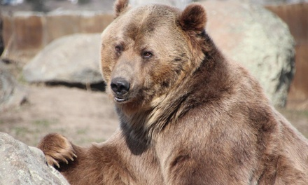 Grizzly Bear Sanctuary Visit at Montana Grizzly Encounter (Up to 58% Off). Three Options Available.