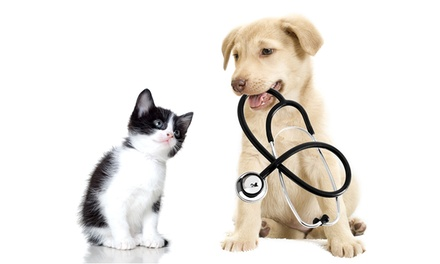Online Veterinary Care Practitioner Course from Online City Training (91% Off)