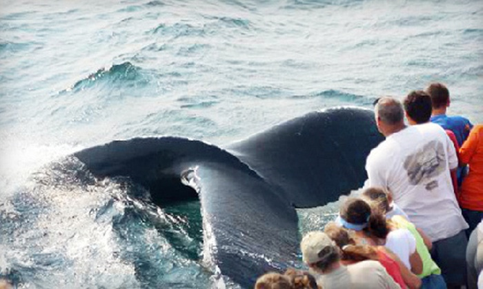Captain John Whale Watching and Fishing Tours - Captain John Whale Watching and Fishing: $53 for a Whale-Watching Tour for Two from Captain John Whale Watching and Fishing Tours in Plymouth (Up to $90 Value)