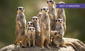 Hawks Of Steele Ltd: Meet a Meerkat Experience for One or Two at Hawks of Steele (Up to 65% Off)
