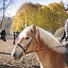 Leçons d'équitation à Saverne