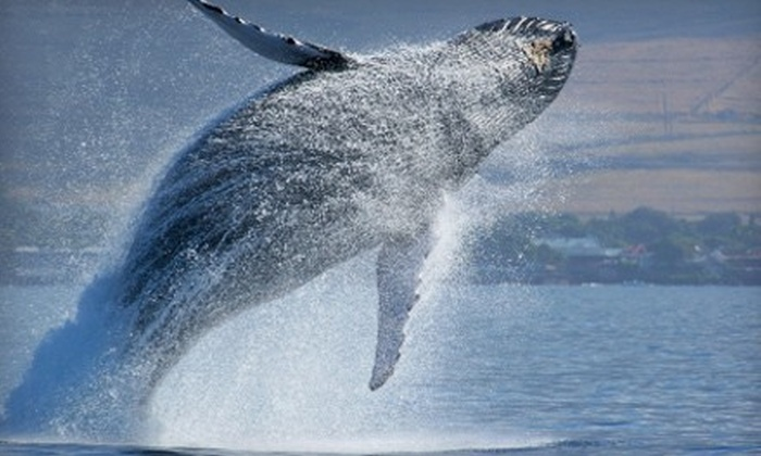 Starlight Fleet - The Starlight Fleet: Three-Hour Whale- and Dolphin-Watching Cruise for Two or Four from Starlight Fleet (Up to 53% Off)