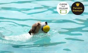 Park Clube doTotó: Day use para cães (opção com banho) no Park Clube do Totó – Barra da Tijuca