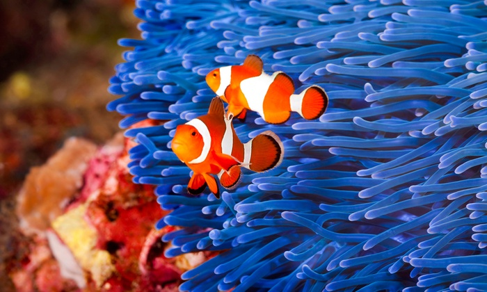 Something Fishy Aquariums and Ponds - Memphis: One or Three Aquarium Cleanings from Something Fishy Aquariums and Ponds (Up to 52% Off)