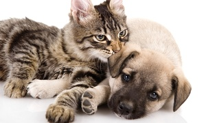 Choice Pet Supply: One or Two Groupons, Each Good for $40 Worth of Pet Food and Supplies at Choice Pet Supply (Up to 40% Off)